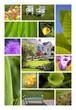 Jardin habitat parc campagne printemps