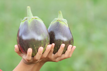 two eggplant on hand