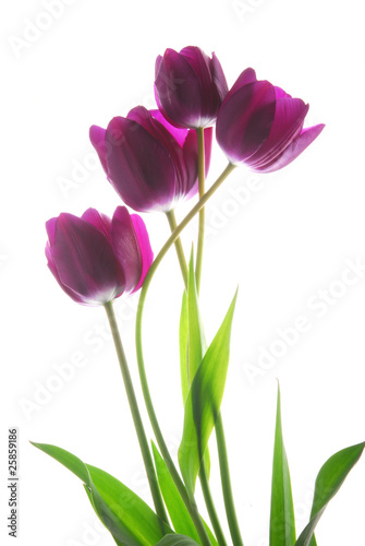 bunch of viol tulip flowers
