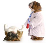 veterinary care