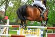 Pferde 114.1