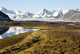 Fototapety Arctic summer landscape with reindeer (Svalbard)