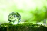 Fototapete Wald - ökologie - Andere
