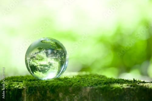 森林 と 地球 儀