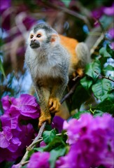 The squirrel monkey and flowers