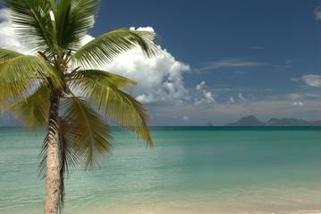 Vue de la plage des Salines sur le Rocher du Diamant