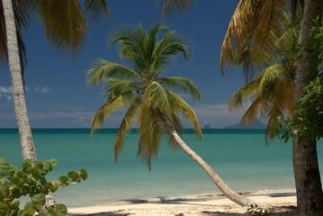 Magnifique plage de Martinique
