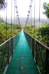 Puente sobre Arboles (Bosque Lluvioso de Monteverde-Costa Rica)