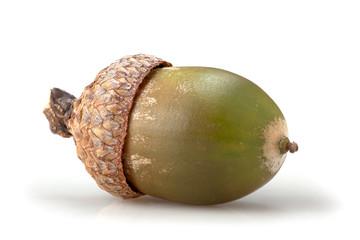 macro acorn on white