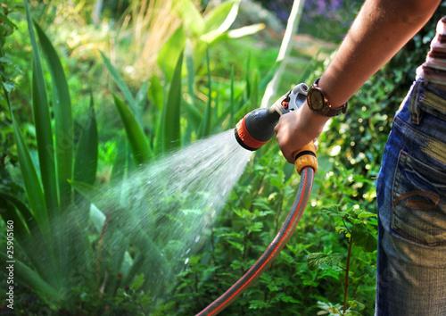 Watering garden - 25905160