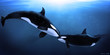 Leinwandbild Motiv orcas tenderness