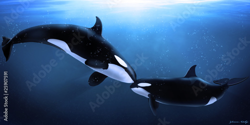 orcas tenderness - 25907591