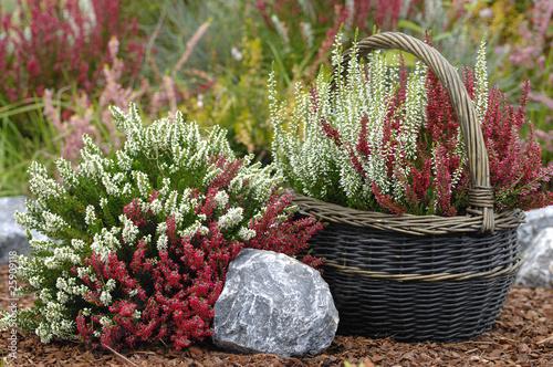 steingarten mit calluna vulgaris heidekraut stockfotos und lizenzfreie bilder auf. Black Bedroom Furniture Sets. Home Design Ideas
