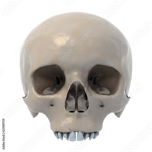 human skull 3d illustration isolated on white background