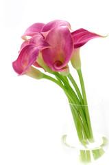 Pink calls bouquet in vase