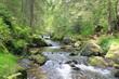 Schwarzwald - 25913760