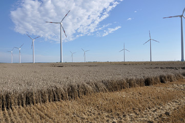 parco eolico nel grano maturo