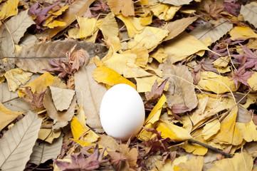 卵を育てる