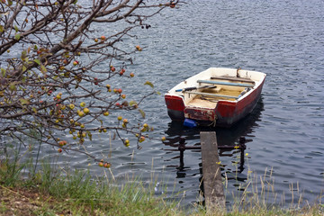 Red rowboat and tree