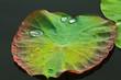 Leinwanddruck Bild - Leaf with Water Drops