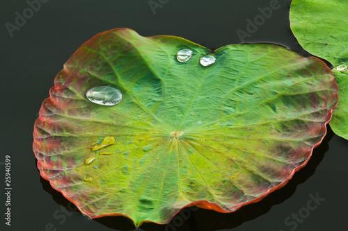 Leinwanddruck Bild Leaf with Water Drops