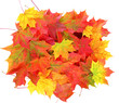 colored fall leaves