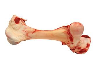 Knochen 1.1