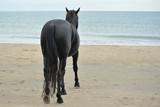 étalon sur la plage poster