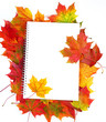 blank paper and frame from fall leaves isolated