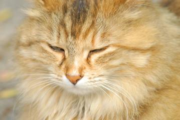 gatto sornione