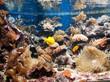 Aquarium tropical - Coraux