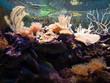 Aquarium tropical