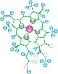Chlorophyll formula I