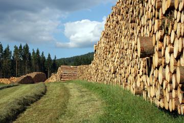 Fichtenholzernte