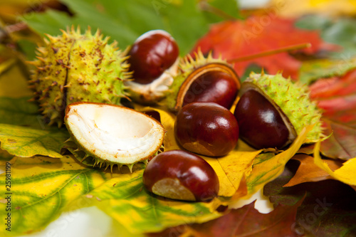 Composition of autumn chestnuts and leaves