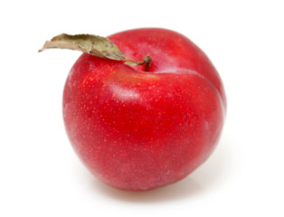 one red plum over white background