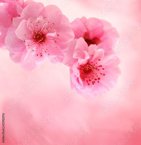 kwiaty-brzoskwini
