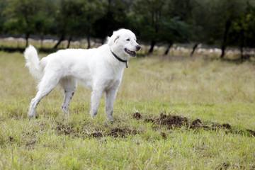 Hund beobachtet
