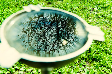reflection in pot