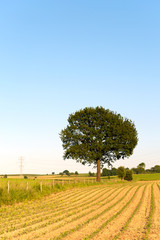Tree in agriculture landscape