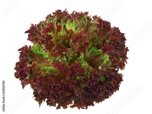 lollo rosso isolated on white background