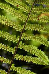 Macro of fern leaf in sunlight rays. Autumn season time.