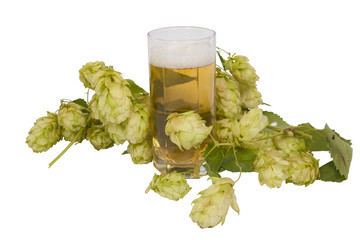 Beer in glass with hop cones isolated on white