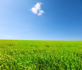 Green hill under blue cloudy sky whit sun