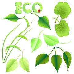blätter eco