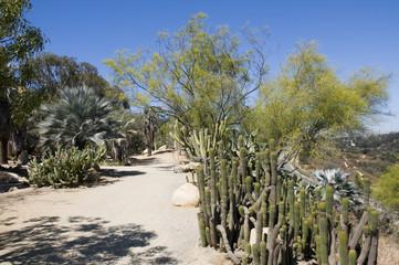Cactus Garden with Blue Sky in California