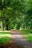 Idyllischer Weg im Park