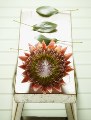 King Protea flower and leaves on bench