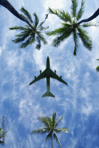 Low angle view of airplane above palm trees