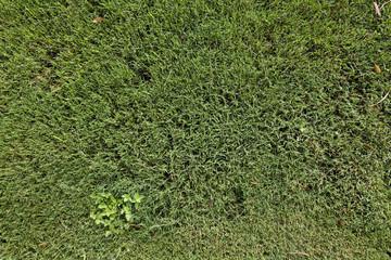 backgrounds - green grass texture